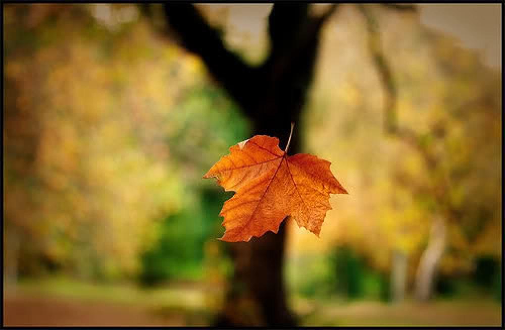 hoja-cayendo-en-otoño